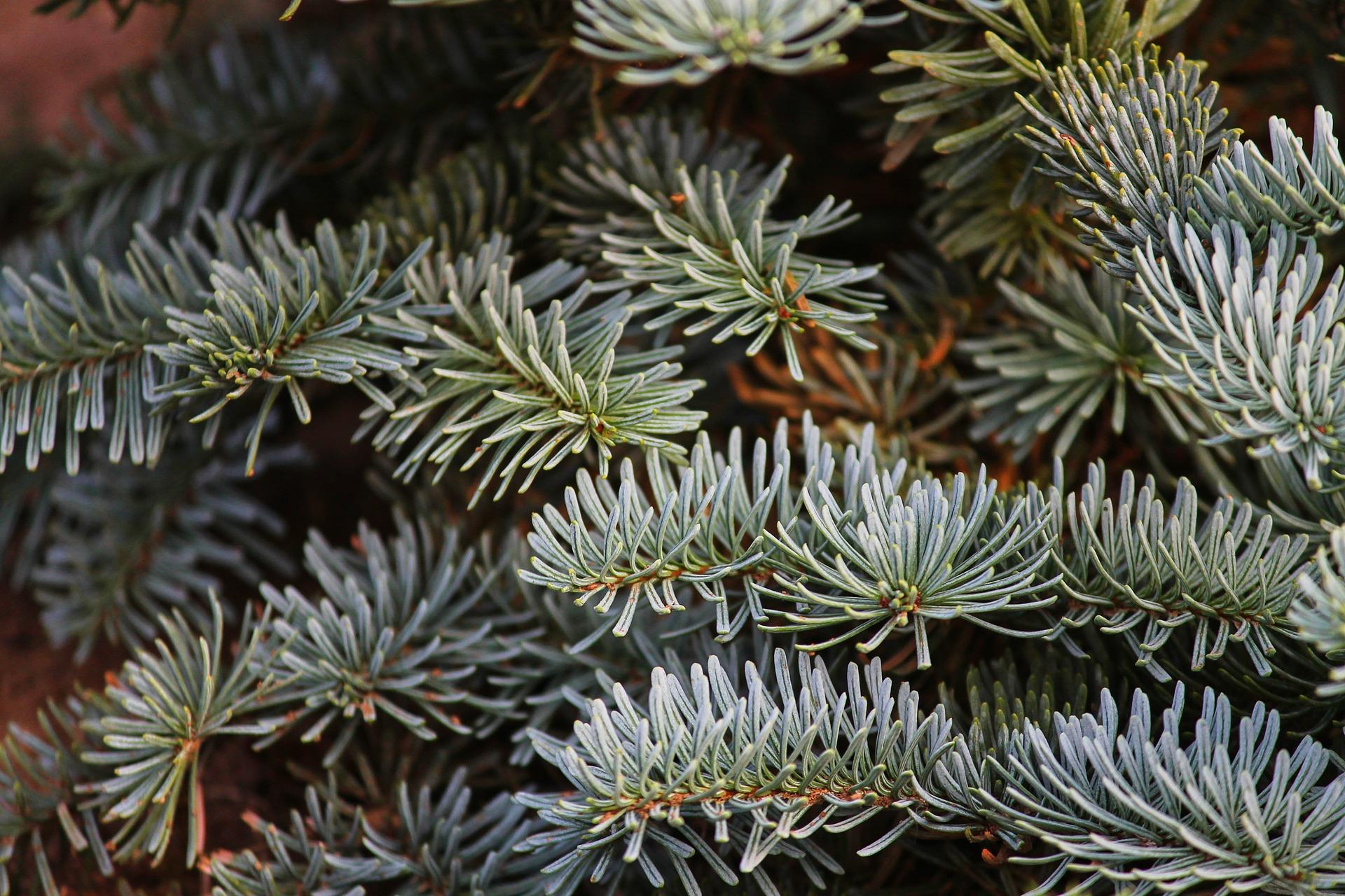 Baumarkt Tannenbaum.Der Bauspezi Weihnachtsbaum Ratgeber Bauspezi Baumarkt Bad Tabarz